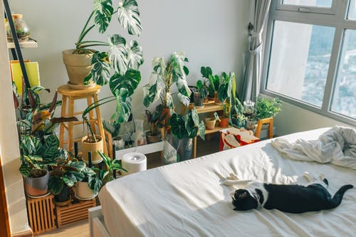 Green Indoor Plant on Brown Wooden Table