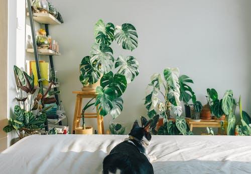 Black Short Coated Dog on White Bed