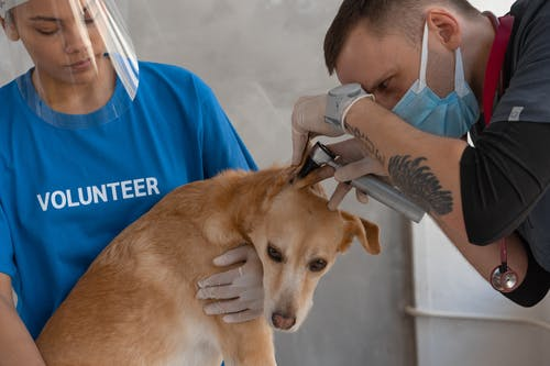 A Dog Having a Checkup on a Veterinary