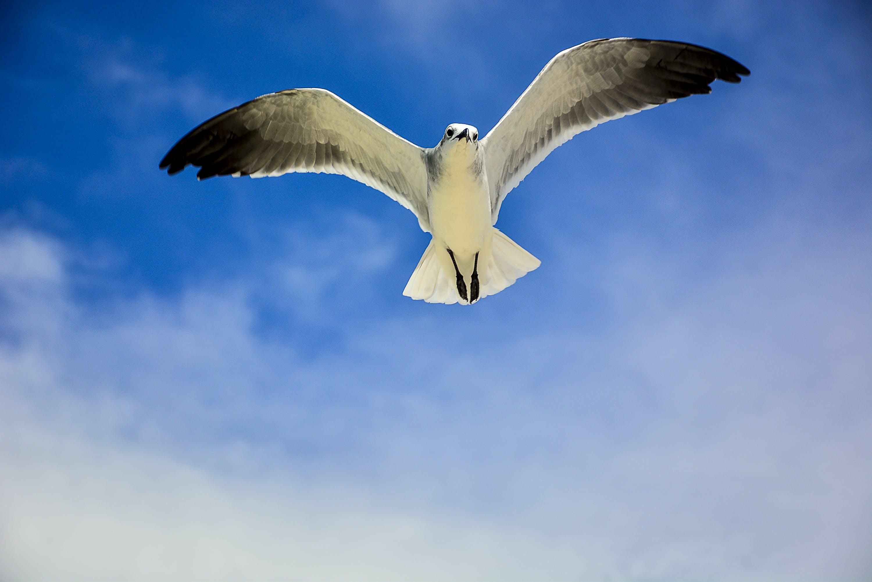 Kostenloses Stock Foto zu meer, flug, himmel, vogel
