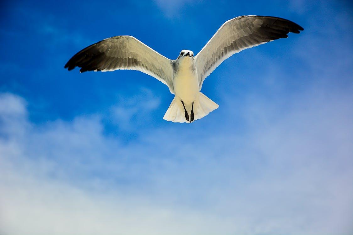 White and Black Bird