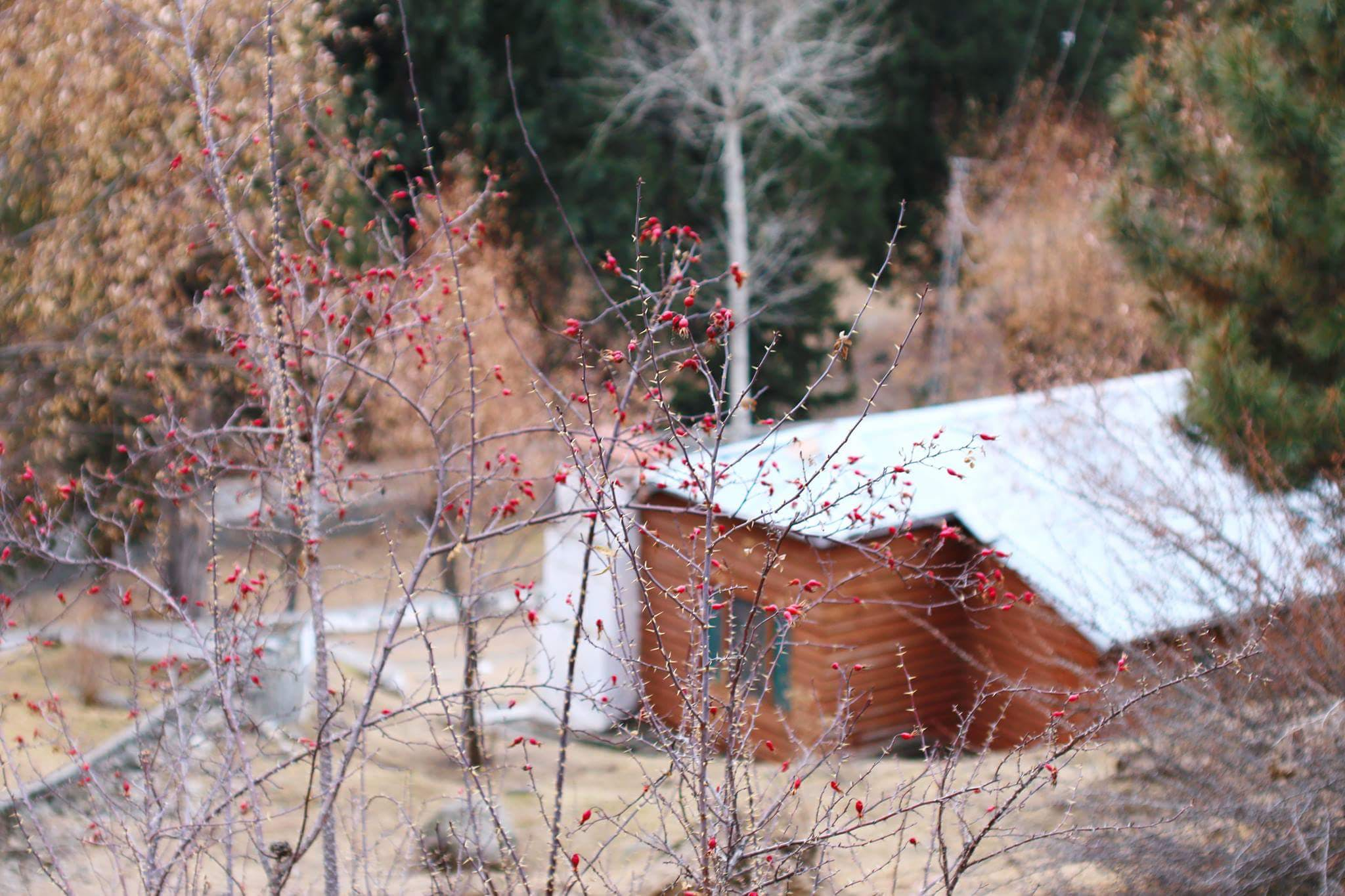 Free stock photo of house, nature, pakistan
