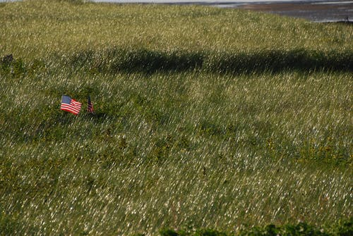 United States Flag on Green Grass Field