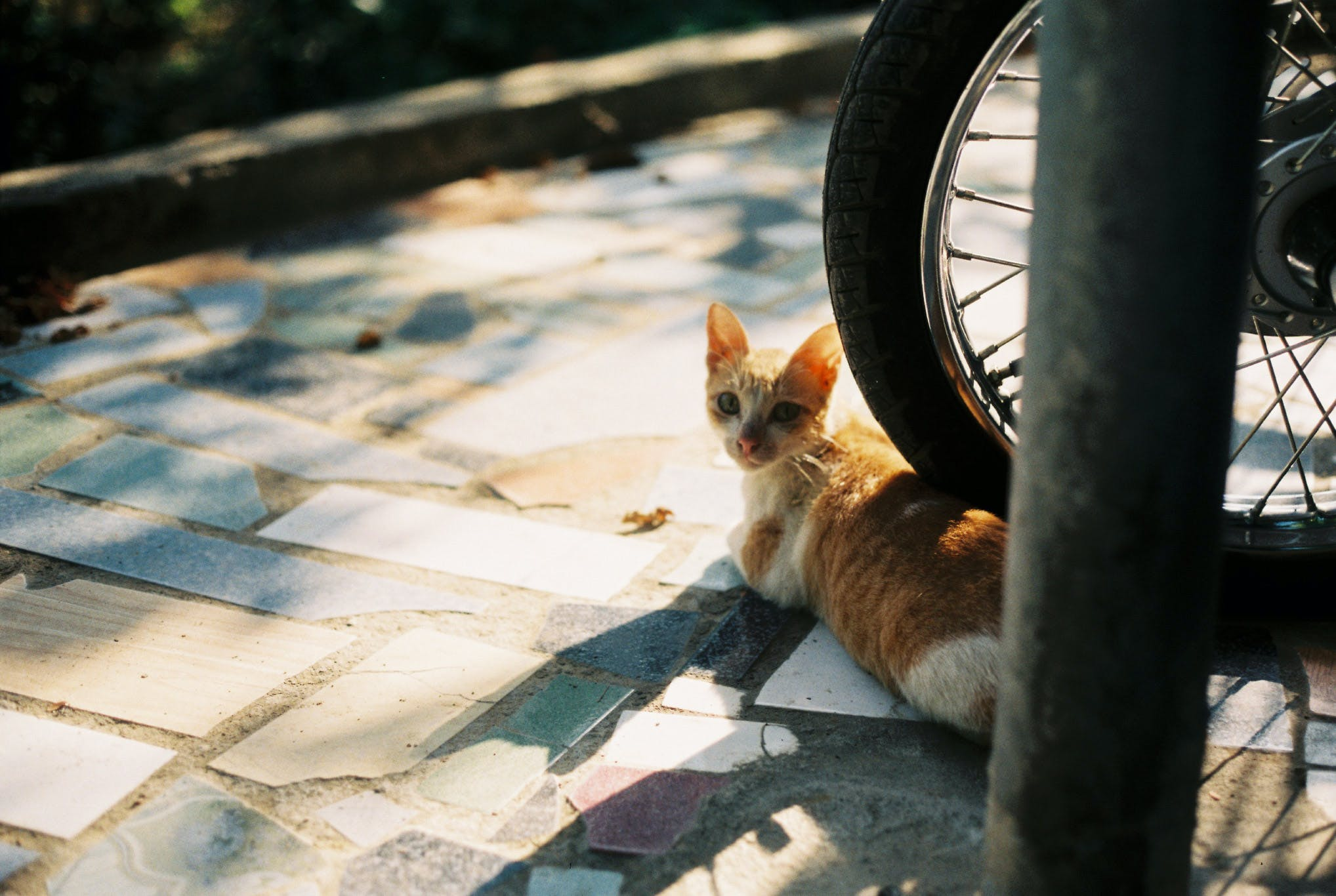 Orange Tabby Kitten on Motorcycle Wheel