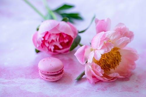 Kostenloses Stock Foto zu aromatherapie, blatt, blume