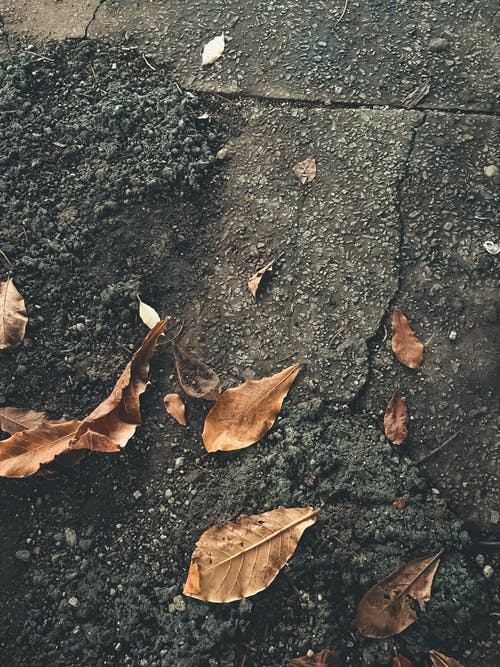 Brown Dried Leaves on Gray Concrete Floor