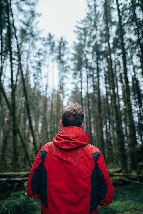 Бесплатное стоковое фото с деревья, дневной свет, зеленый, красная куртка