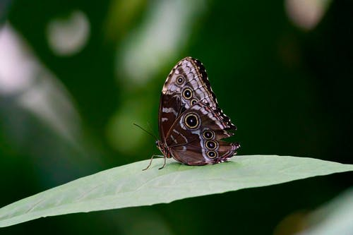Brown and Black Butterfly on Green Leaf