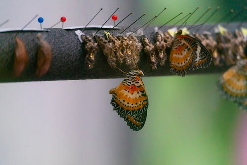 Free stock photo of bontanical, botanical garden, bugs