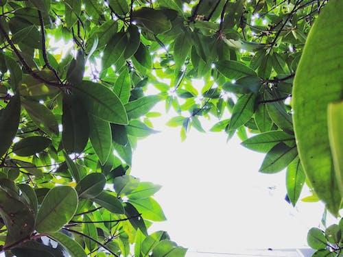 Безкоштовне стокове фото на тему «краса, Природа, Шрі-Ланка»