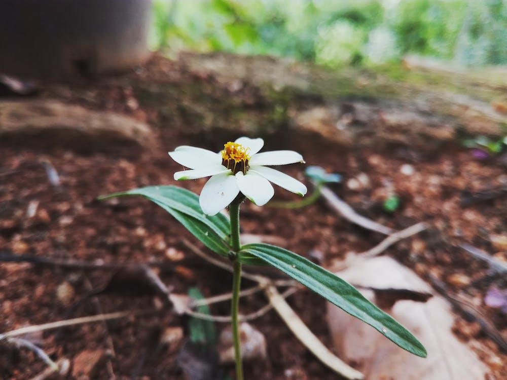 квіти, макрофотографія