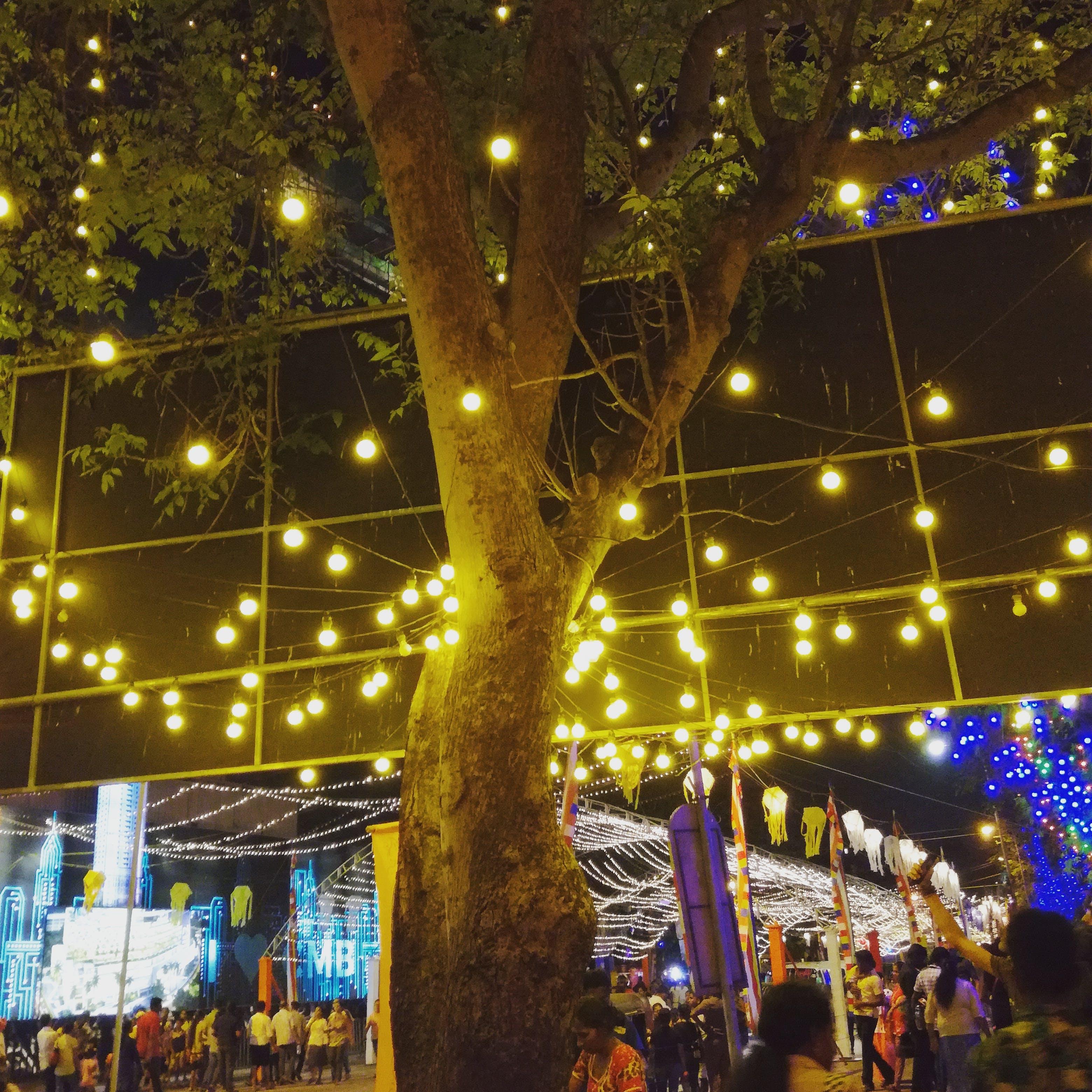 Free stock photo of night, streetlight, vesak