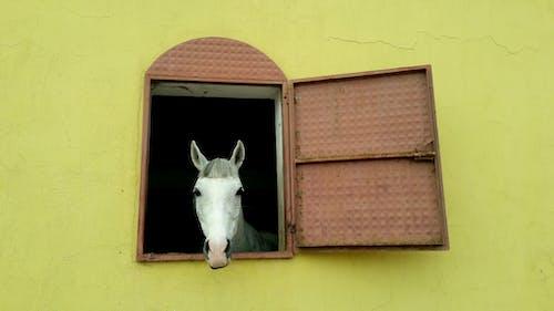 White Horse in Orange Wall