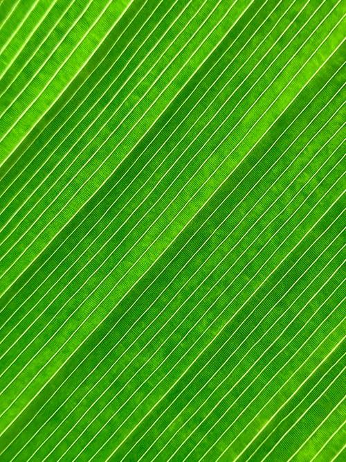 Close-Up Shot of a Green Textile