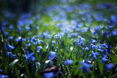 Крупным планом фото голубой лепесток цветок в дневное время