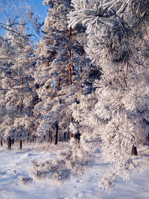 Foto profissional grátis de árvores, branco, com frio, congelado