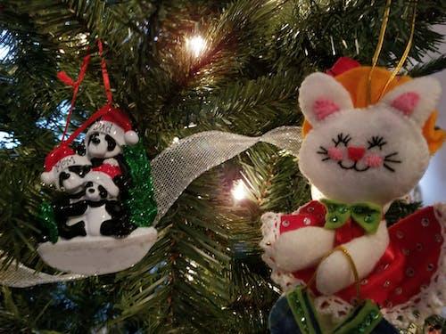 고양이, 곰, 불빛, 크리스마스의 무료 스톡 사진