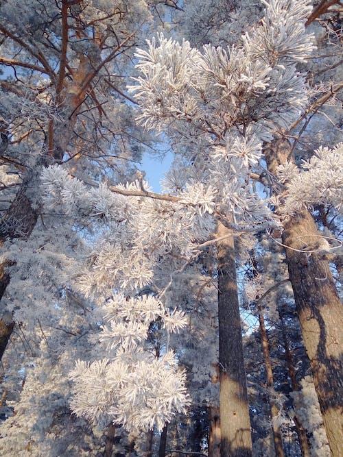 ağaçlar, beyaz, buz, doğa içeren Ücretsiz stok fotoğraf