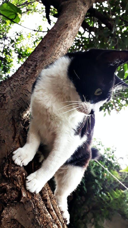 Immagine gratuita di albero, bianco e nero, gatto