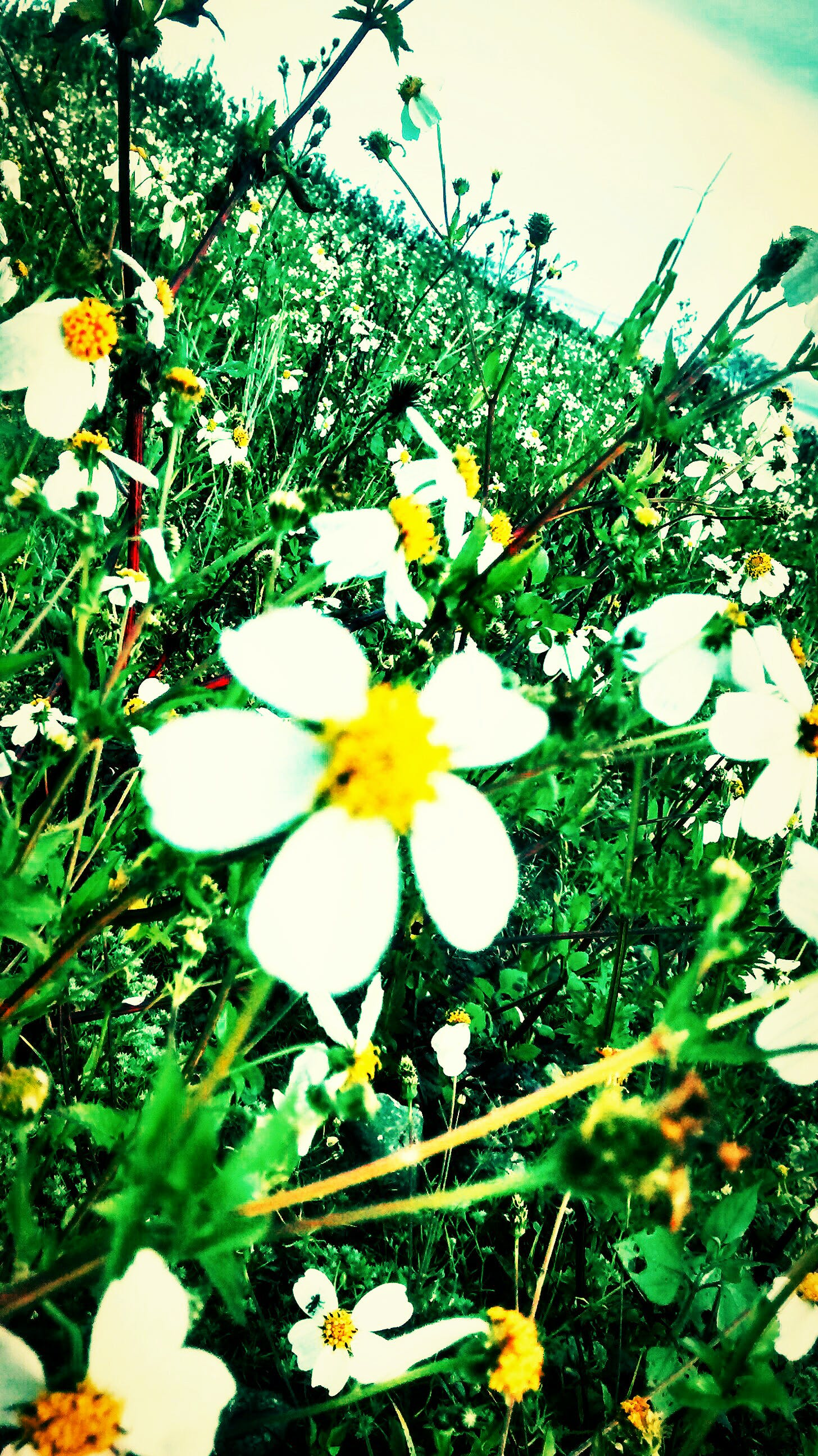 Free stock photo of wild flower