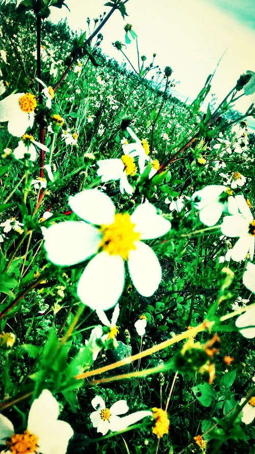 Immagine gratuita di fiore selvatico