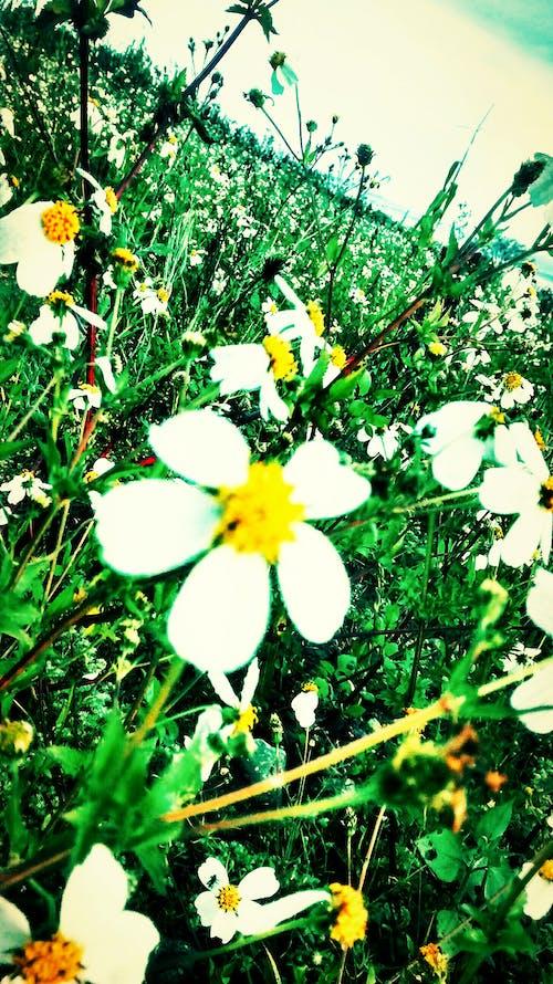 Безкоштовне стокове фото на тему «дика квітка»