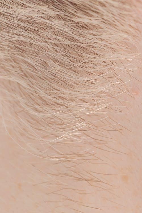 Fotos de stock gratuitas de brillante, cabello, cabello corto