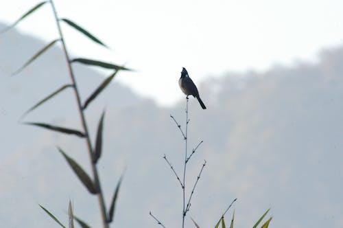 Foto d'estoc gratuïta de arbres, boscos, fotografia, fotografia d'aus