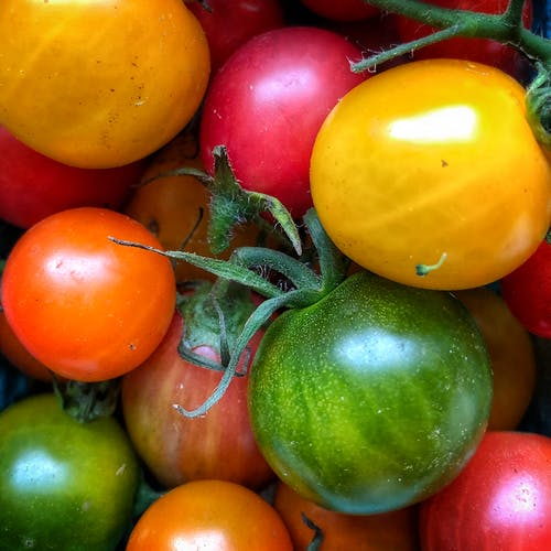 Free stock photo of cherry tomatoes, fresh vegetables, tomatoes