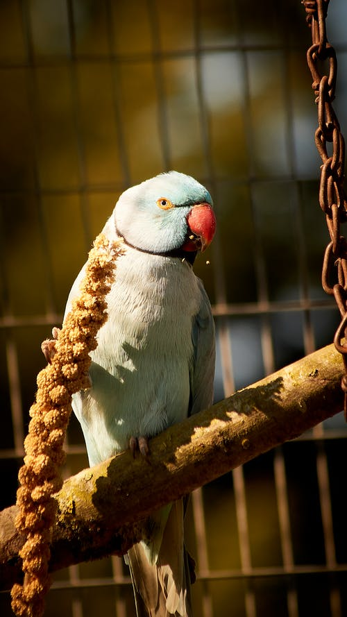 Bird with Red Beak Perched on Brown Pole