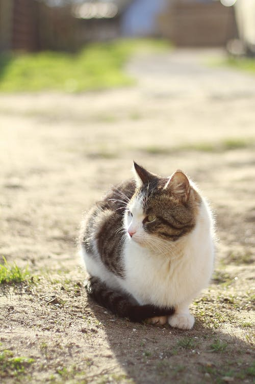 White and Grey Cat on Ground
