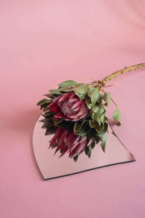 Protea Flower on Top of Mirror