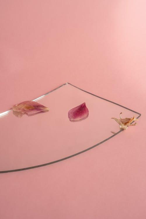 ayna, kuru çiçek, minimalizm içeren Ücretsiz stok fotoğraf