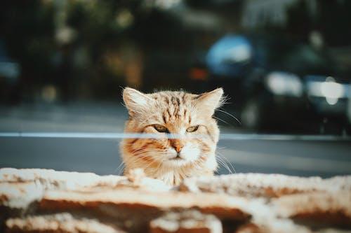 イスタンブール, イスタンブールの猫, おもしろいの無料の写真素材