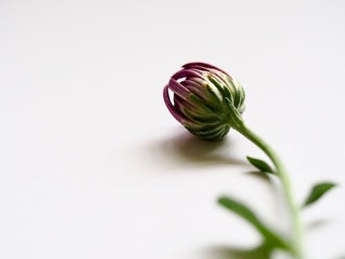 Ảnh lưu trữ miễn phí về cận cảnh, hệ thực vật, màu tím, mơ hồ