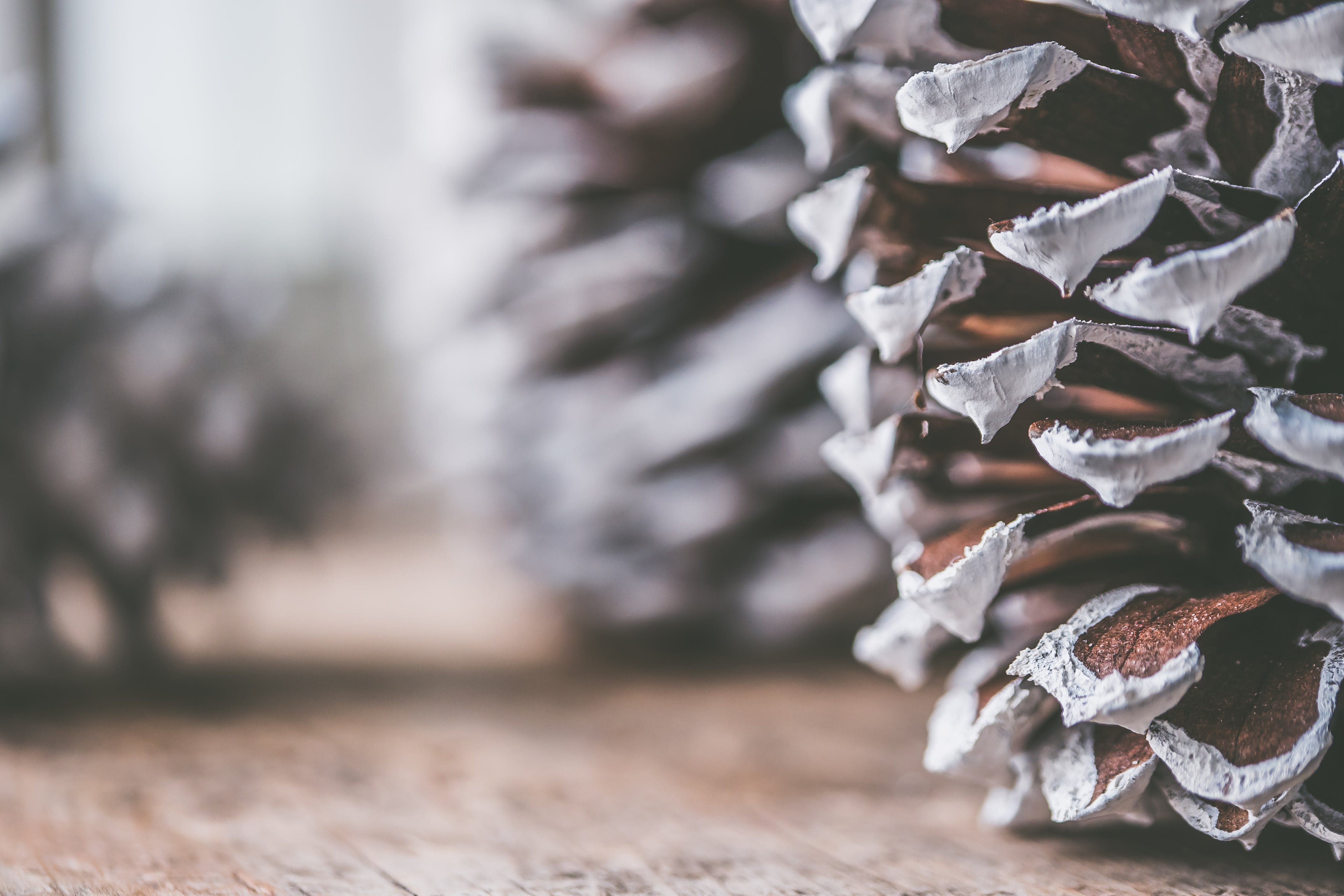 Brown and Gray Decorative Pine Cone