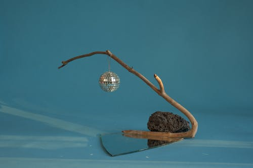 Brown and White Bird Nest on Brown Tree Branch