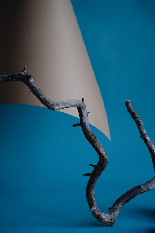 Free stock photo of bird, blue, branch