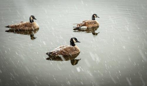 Immagine gratuita di animale, animale acquatico, bellissimo, inverno