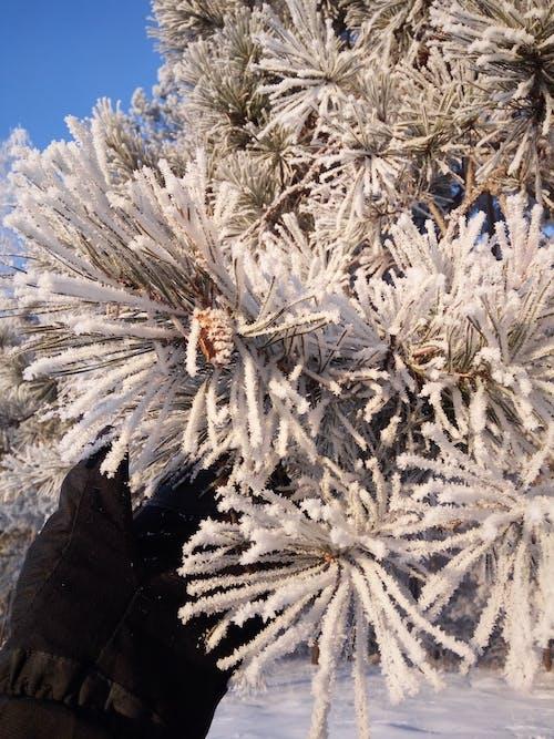 Foto profissional grátis de árvores, branco, com frio, congelando