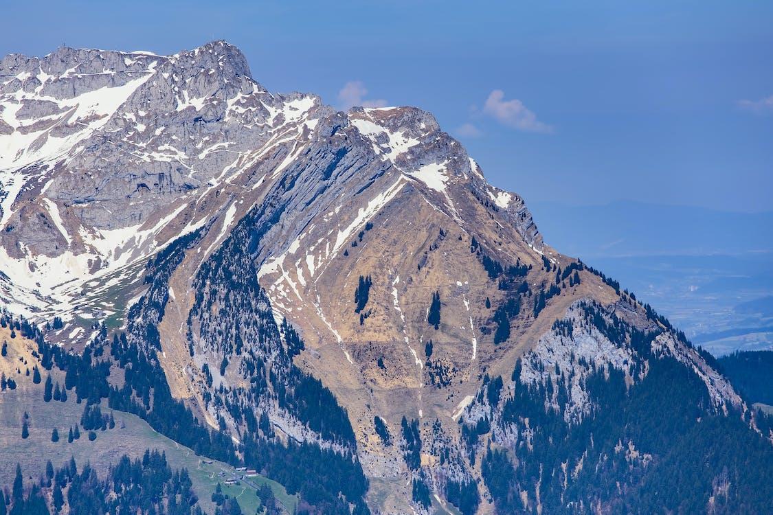 ağaç, alp, Alpler