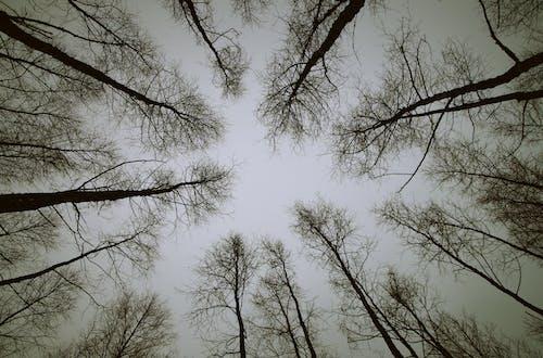 Fotobanka sbezplatnými fotkami na tému čierna a biela, exteriéry, lesy, malebný