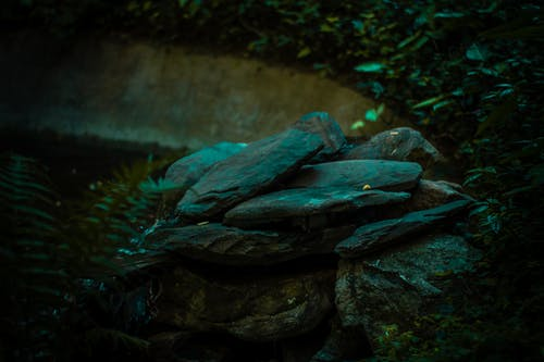 Fotos de stock gratuitas de rocas, verde, verde oscuro