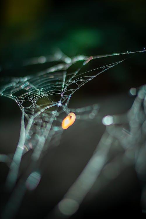 Fotos de stock gratuitas de araña, aranha, naturaleza