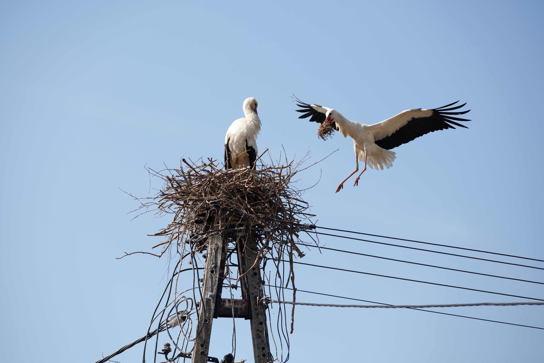 Free stock photo of bird, birds, couple, stork