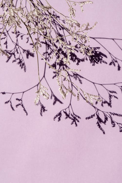 Delicate branches of dried plant