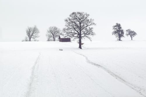 Snowy road to farmhouse with trees