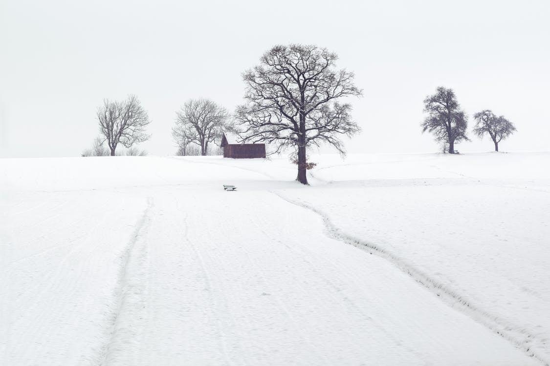 Landscape Photography of Dried Trees on Snow Covered Ground