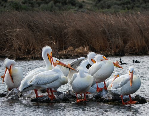 White Birds on Body of Water