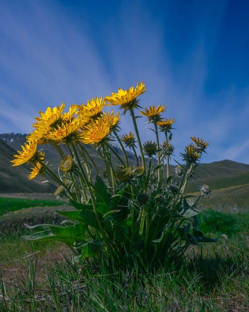 Yellow Flower on Green Grass Field Under Blue Sky